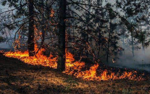 Árboles en llamas