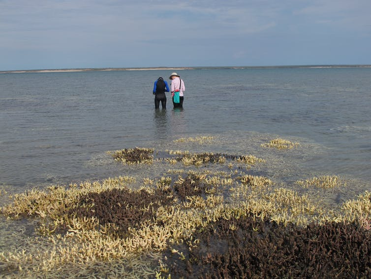 People standing on a coal reef