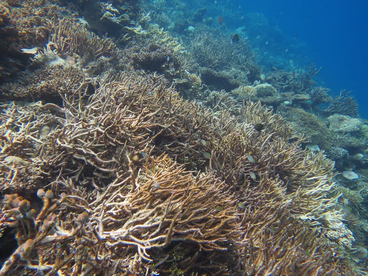 Coral bleaching at the Maledives