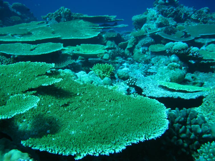 Coral reef in Chagos