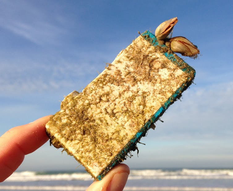Una mano que sostiene un cartucho de tinta que ha crecido percebes del mar