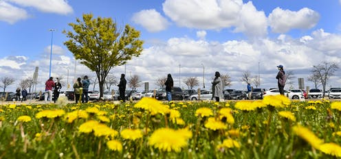 People line up at a mass vaccination centre with a field of dandelions in the foreground