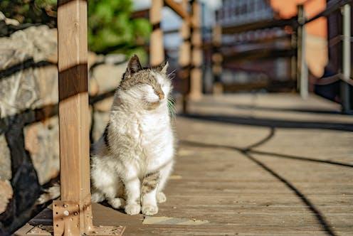 A cat in the sun