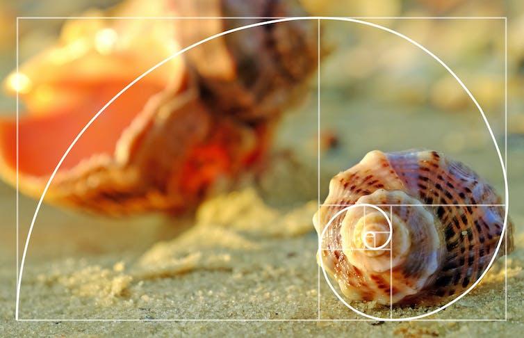 Golden ratio against a shell on a beach.