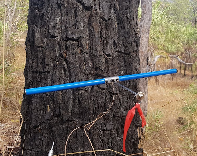 A tree trunk with a blue scientific instrument attached