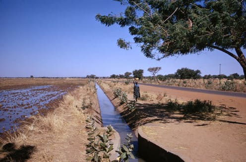 Woman walks on a path next to an irrigation ditch between a field and a road.