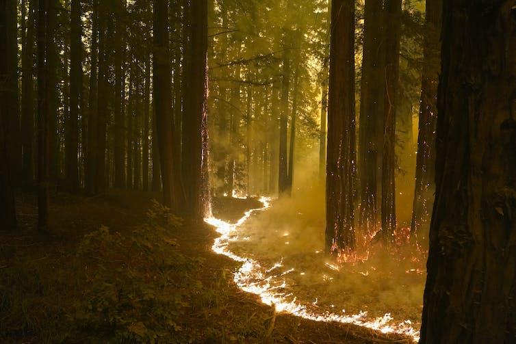 A strip of fire runs along the forest floor.