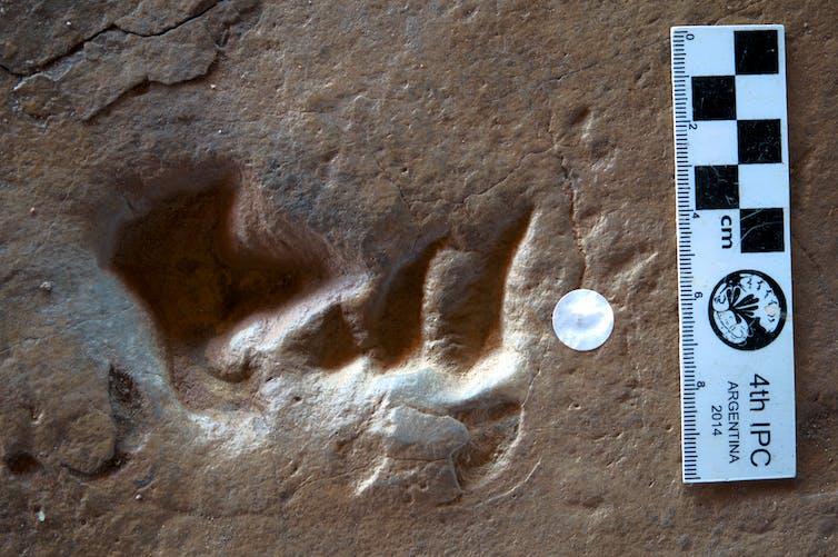 Crocodyliform and theropod footprint.