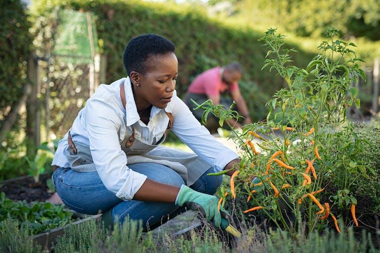 Mulher se agacha enquanto faz jardinagem.