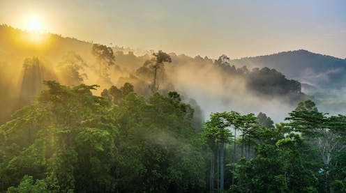 View of a rainforest in Borneo with the sun coming up over a mountain and shining through the mist.