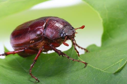 A brown bug on a green leaf