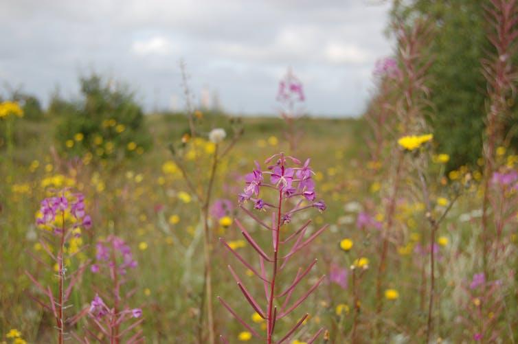 Wildflowers grow in a field