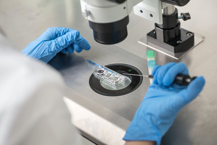 Lab technician performs IVF.