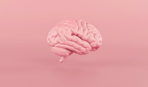 A model of the human brain against a pink background