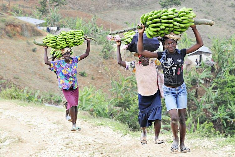 Des femmes transportant des bananes sur leur tête, sur un chemin de terre montagneux, en Haïti