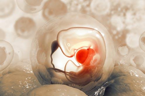 3d illustration of a human embryo
