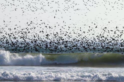 seabirds fly over breaking waves