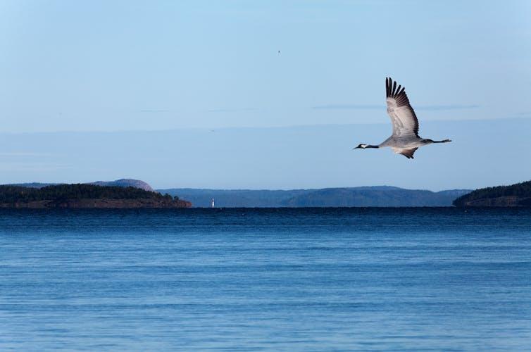bird flies over water