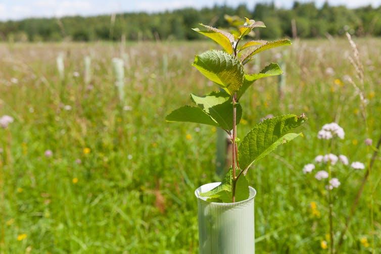A tree sapling in a plastic bracket in a field.
