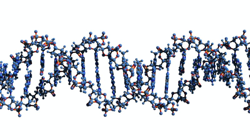 "Virus con ADN ""extraterrestre"""