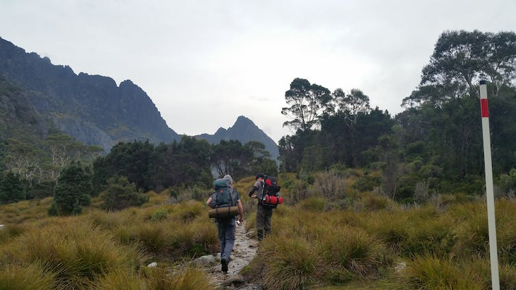 Two hikers on a grassland trail
