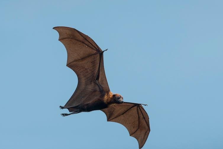 A bat flying against a blue sky