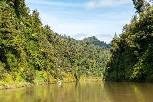 Whanganui River and surrounding forest