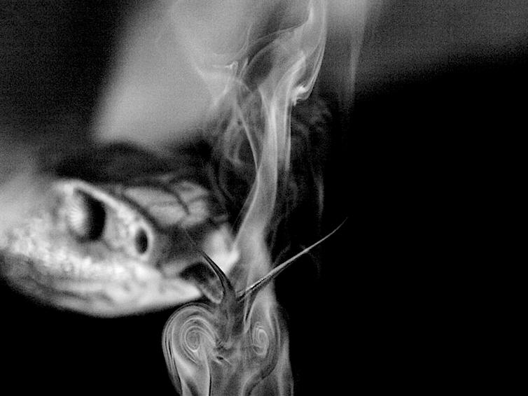 A snake flicking its toungue through a veil of smoke creating two swirls.
