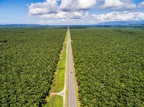 Aerial view of a road through a large plantation