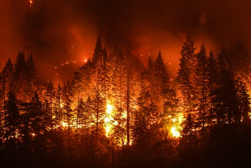 Forest on fire at night
