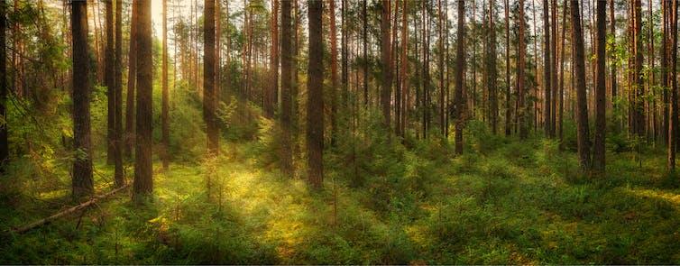 Sun shines through a dense forest
