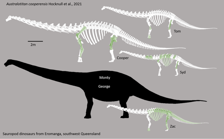 Silhouettes of skeletons of various 4-legged long-necked sauropds.
