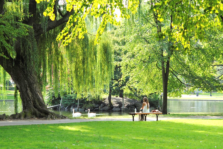 Woman sits alone on a bench next to lake and trees in a park