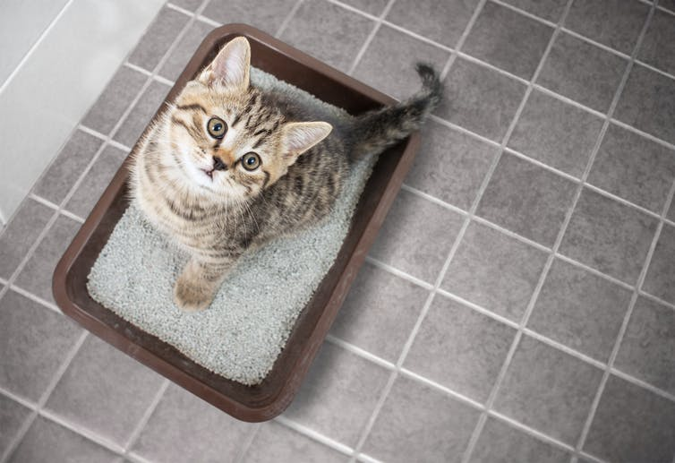 Cat sitting on litter tray