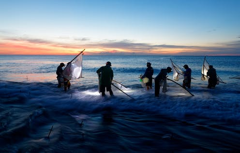 Taiwanese fishers using traditional triangle nets in shallow seawater