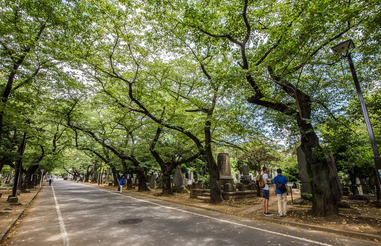 In Japan, 'tree burials' gain in popularity as lack of burial space is changing age-old funeral practices