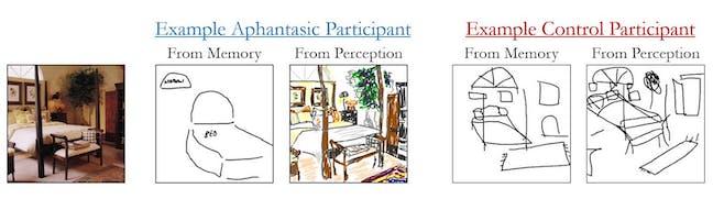 Exemple de dessin d'un participant aphantasique, de mémoire, et par observation © Zoë Pounder  En fait, nos résultats ont montré qu'ils dessinaient correctement la taille et l'emplacement des objets, mais fournissaient sensiblement moins de détails visuels, tels que la couleur. Ils représentaient aussi un moins grand nombre d'objets par rapport aux dessins des personnes témoins.  Certains, enfin, ont noté ce qu'était l'objet par le langage – en écrivant par exemple les mots « lit » ou « chaise » – plutôt que de le dessiner. Cela suggère l'usage de stratégies alternatives, telles que des représentations verbales, ne sollicitant pas la mémoire visuelle. Ces différences dans les détails des objets et de l'espace n'étaient pas dues à des différences d'aptitude artistique ou à un manque de concentration.  Tout ceci laisse penser que les personnes atteintes d'aphantasie ont des capacités d'imagination cérébrale spatiale intactes : la capacité de représenter la taille, l'emplacement et la position des objets les uns par rapport aux autres est préservée. Une constatation renforcée par une autre de nos études consacrée à leurs performances dans des exercices liés à la mémoire et ses effets sur la représentation mentale.  Nous avons alors constaté que les personnes qui n'avaient pas la capacité de générer des images visuelles obtenaient d'aussi bons résultats dans ces exercices que celles ayant une bonne représentation mentale visuelle. Nous avons également constaté des performances similaires avec la technique classique de rotation mentale (RM), où il faut observer différentes figures et, en les faisant pivoter mentalement, déterminer lesquelles sont identiques.  Ces résultats suggèrent qu'il n'est pas nécessaire de posséder une bonne imagination visuelle pour effectuer ces tâches. En revanche, il a été démontré que certaines personnes atteintes d'aphantasie – mais pas toutes – sont plus susceptibles d'avoir des difficultés à reconnaître les visages et une mémoire autobiogra