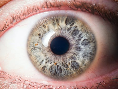 A close-up of the human eye