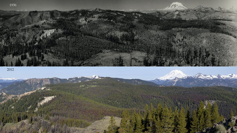 Two photos of the same forest landscape, the older photo showing more open area in the forest.
