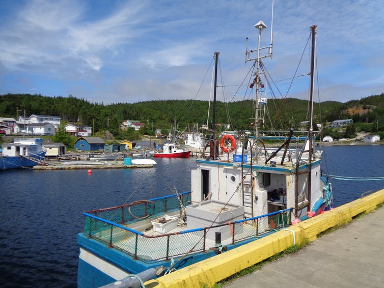 A blue and white fishing boat in a rural Canadian harbour.