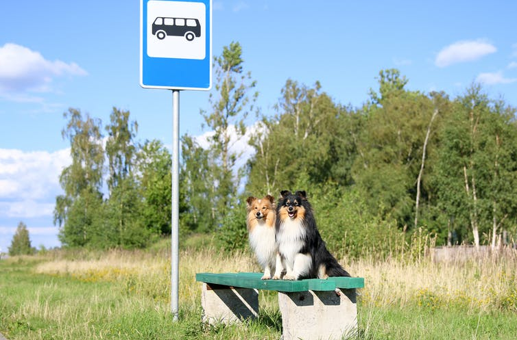 Two dogs sitting on a bench at a bus top