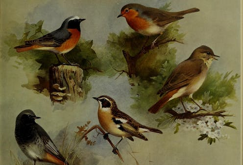 Four painted small birds