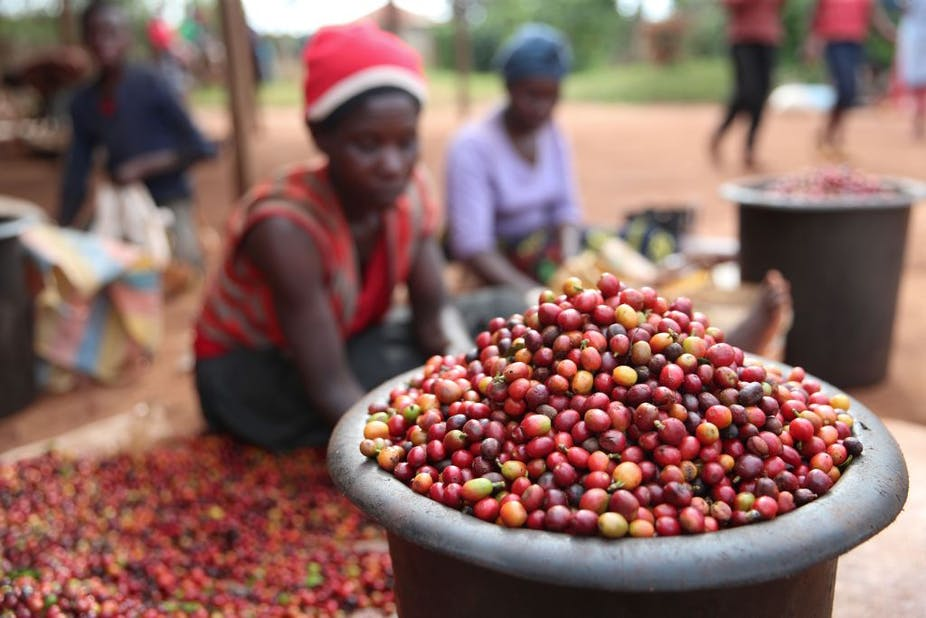 A container full of coffee beans; in the background women sit on the ground with more beans spread on the ground