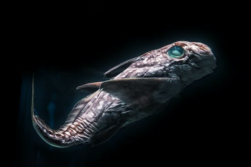 A deep sea fish in the darkness.