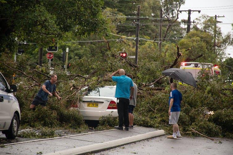 People inspect trees fallen on cars