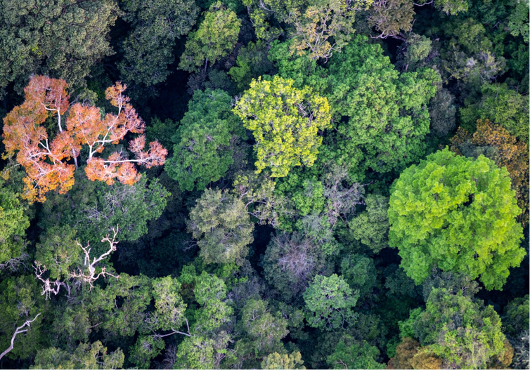 Amazon forest canopy