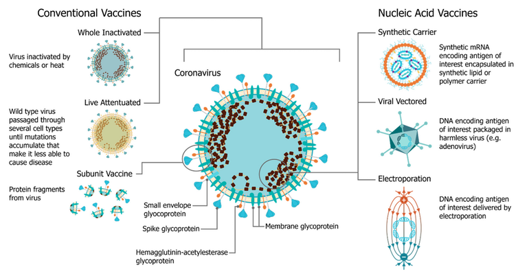 diagram of vaccine platform options