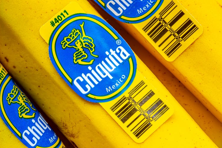 Picture of Chiquita bananas with the logo stuck on them