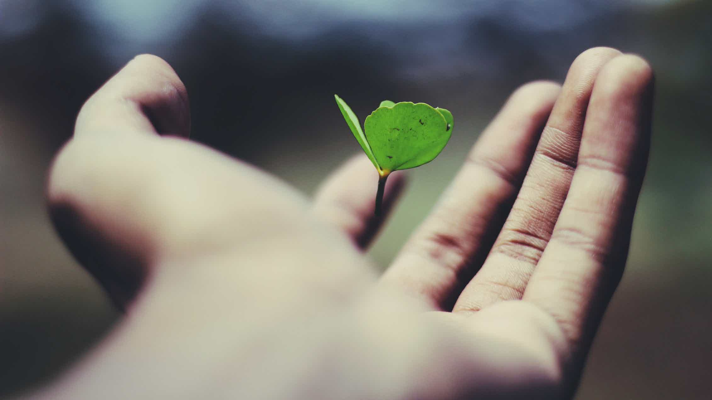 A hand holds a seedling.