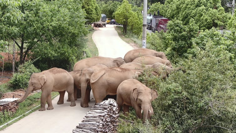 Elephants grazing at plants by a road
